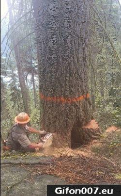 Tree, Felling, Video, Gifs, Gif, Fail, Lumberjack
