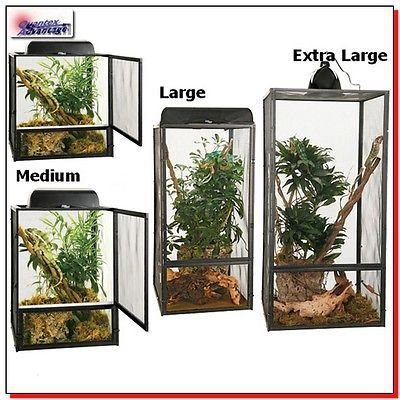 25 Best Ideas About Reptile Terrarium On Pinterest