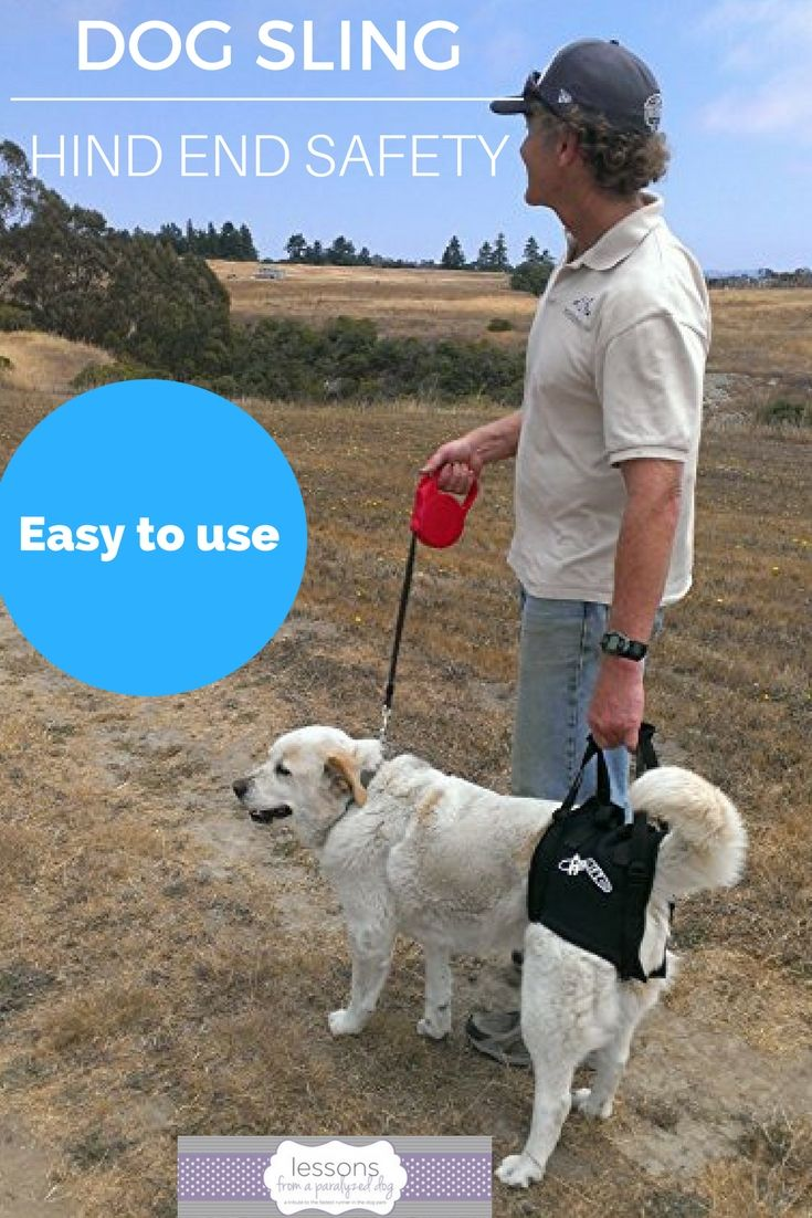 Aiflift One from Walkabout Harnesses is a top-rated dog sling for dogs with hind end weakness. Veterinarian tested.