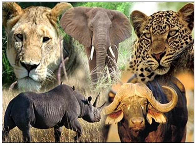 The Big 5 on our Africa Safari Group Escorted Tour.