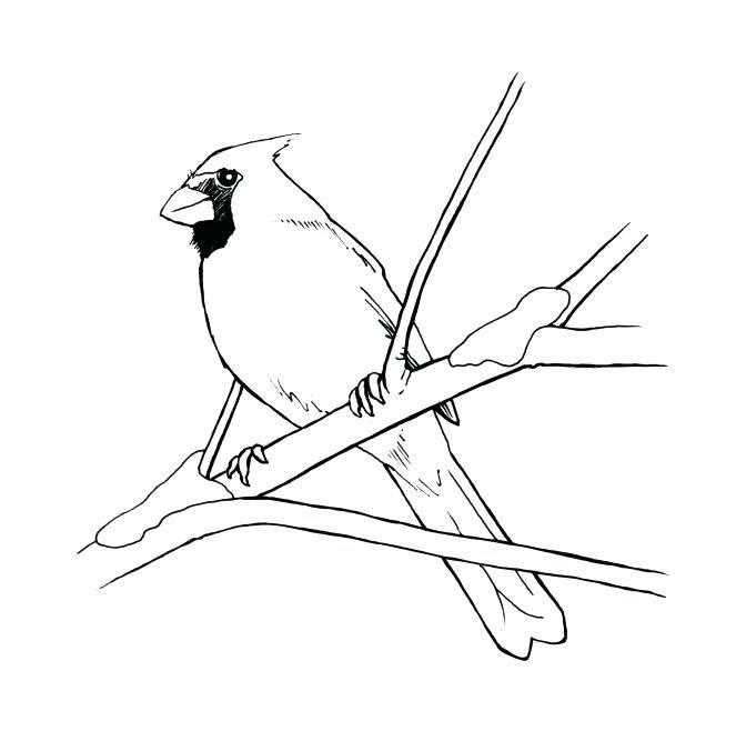 Cardinal Coloring Sheets Pages Preschool Free Bird Of Birds