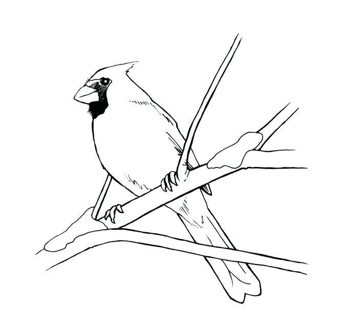 Cardinal Coloring Sheets Pages Preschool Free Bird Of Birds