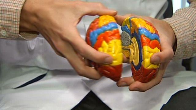 Het brein van man en vrouw werkt écht anders  Amerikaans onderzoek lijkt de bestaande clichés over vrouwen die last hebben met parkeren en mannen die niet kunnen multitasken, te bevestigen.