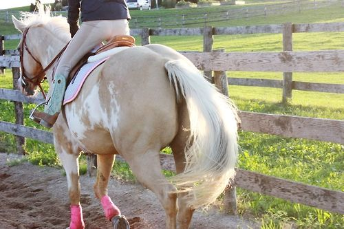 1000+ Images About Horse Butts! On Pinterest