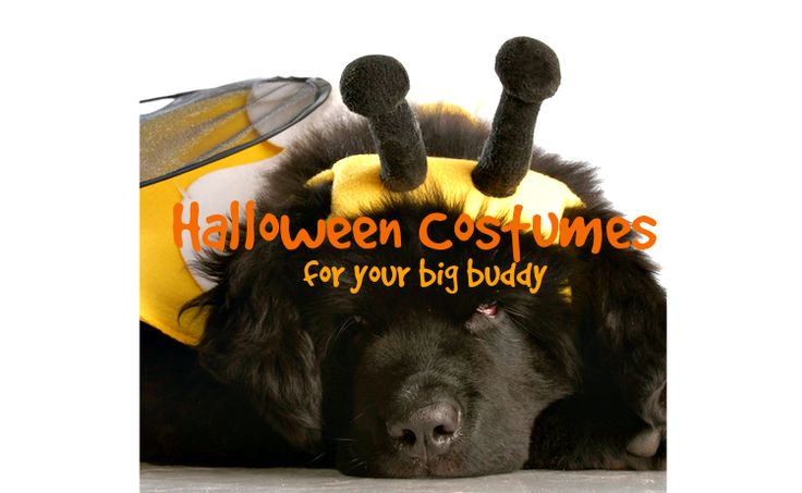 Halloween costumes for your big dog!