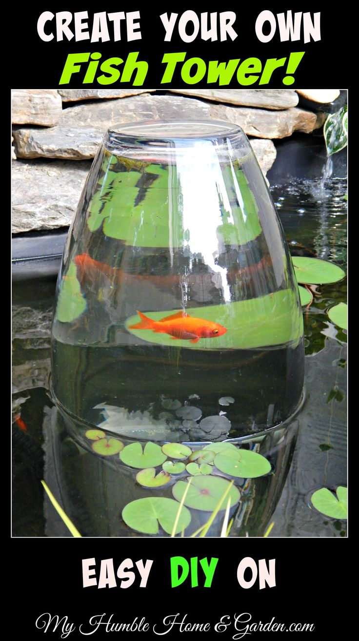 Best 25 fish ponds ideas on pinterest pond kits koi for Koi fish pond for beginners