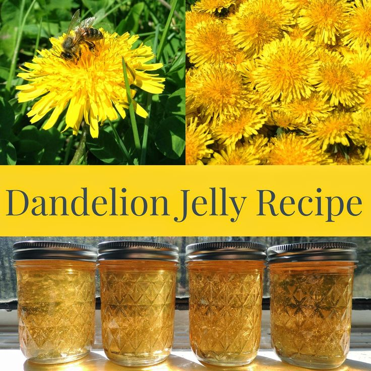 Dandelion Jelly Canning Recipe using the flower petals.