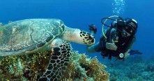 Aqaba kuuluu sukelluskohteiden aateliin http://www.rantapallo.fi/rantalomat/aqaba-vie-sukeltajan-punaisenmeren-aarteille/