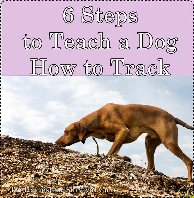 6 Steps to Teach a Dog How to Track Homesteading  - The Homestead Survival .Com