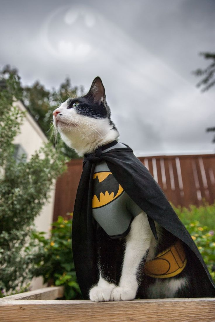 10 Absolutely Adorable Animals In Costumes - SQUEE-wok