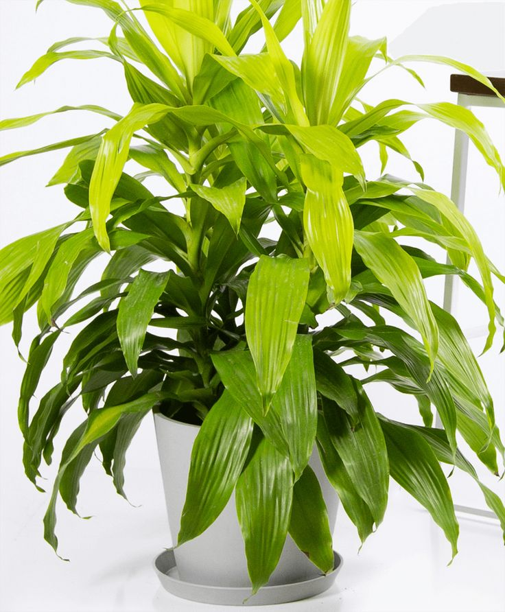 Join the Waitlist - Bloomscape | Houseplants low light ...