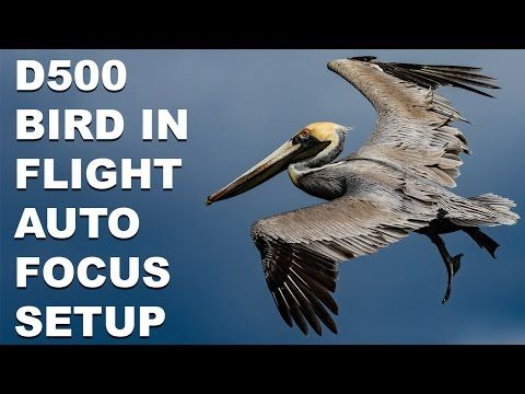 Nikon D500 Bird In Flight Autofocus System Setup | NIKON-TUTORIALS