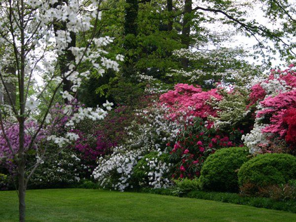 10 best ideas about privacy trees on pinterest privacy for Large bushes for landscaping