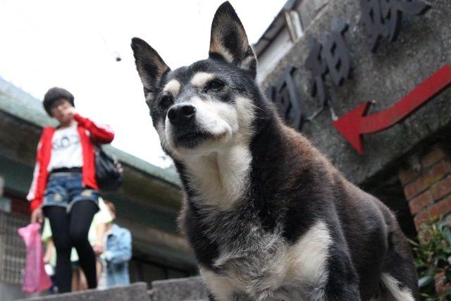 犬の里親になる際の注意点 | ペット暮らし