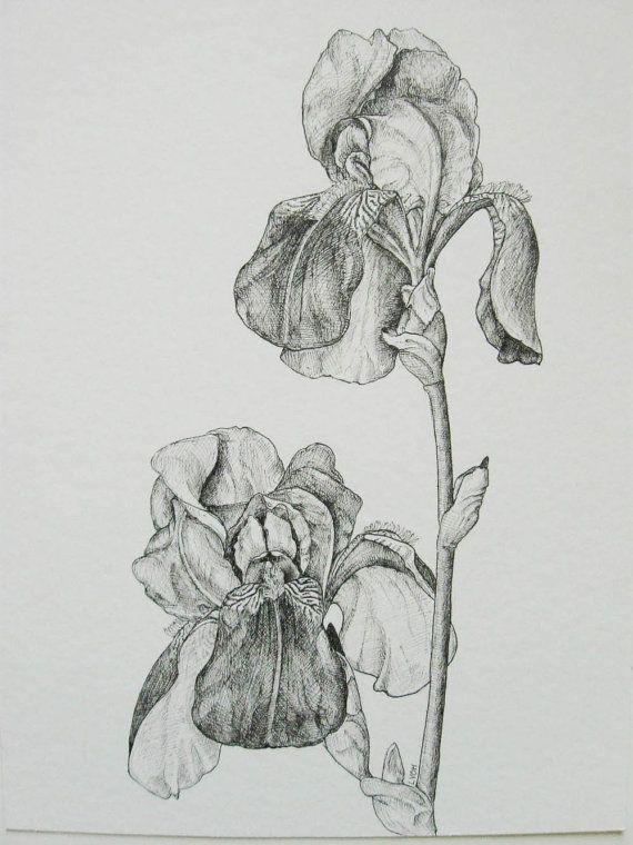 Irises botanical drawing original black and white pen and ink detailed