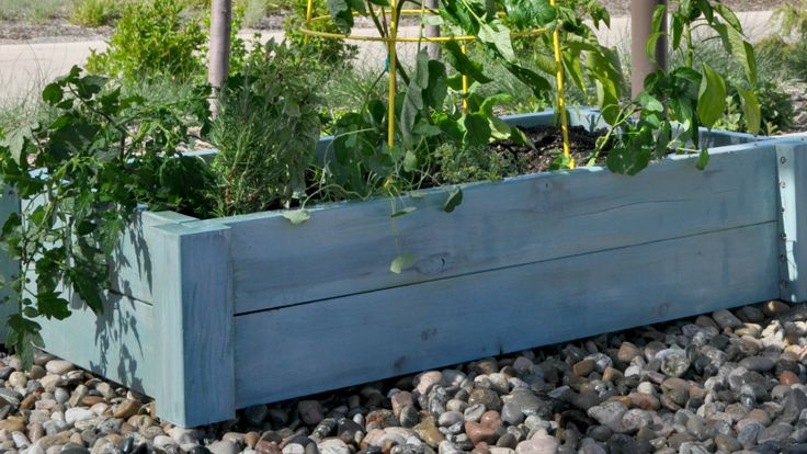Starting today, Studio 5 lays out week by week blueprint for your 'Garden in a Box'. We'll show you what to plant and how to plant for the strongest, prettiest beds on the block.