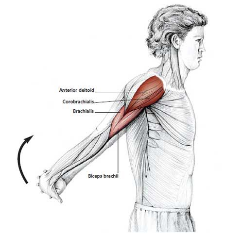 Reverse Shoulder Stretch  Stand upright and clasp your hands together behind your back. Slowly lift your hands upward.