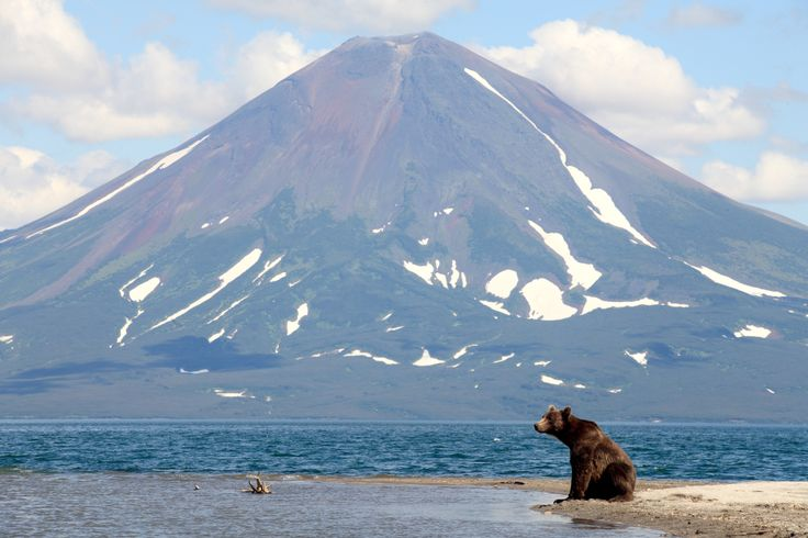 A bear spotted in Kamchatka