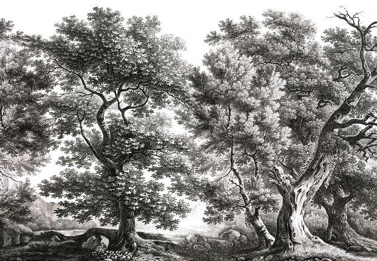 Paysages gravures - Le vieux Chêne - Noir et blanc - 450x300 - 5 lés de 90cm - ultra mat