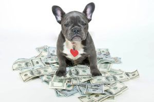 6 Top Tips for Living with Dogs on a Budget - Best Bully Sticks