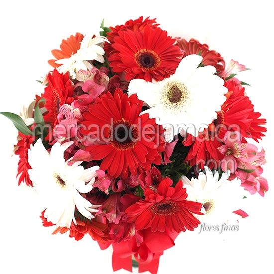 Gerberas Rojas Terciopelo| Envia Flores