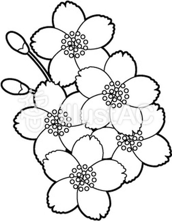 椿 花 イラスト 白黒 Google Search A Stencil And Lily Of The