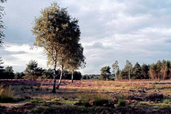 Wandelen op de Veluwe tussen Bos en Heide - EdeStad.nl