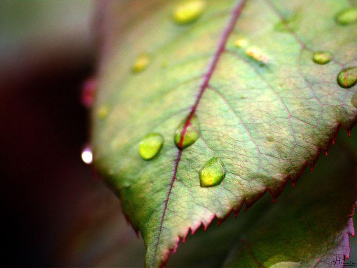 Sezon wypoczynku na świeżym powietrzu jest już od dawna otwarty. W wielu polskich ogrodach można znaleźć meble drewniane, które oferują więcej niż zwykłe meble. To komfort, luksus i elegancki styl. Meble drewniane są bardzo wytrzymałe, a po odpowiednim zabezpieczeniu również odporne na działanie warunków atmosferycznych, wilgoci, grzybów i innych zagrożeń natury biologicznej. Aby w pełni cieszyć się swoimi meblami, a radość ta mogła trwać jak najdłużej, należy o nie dbać.