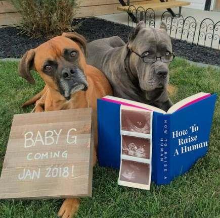 45+ Ideen Baby Ankündigung Ideen mit Hunden Mutterschaft Triebe für 2019   – Our wedding ❤️❤️