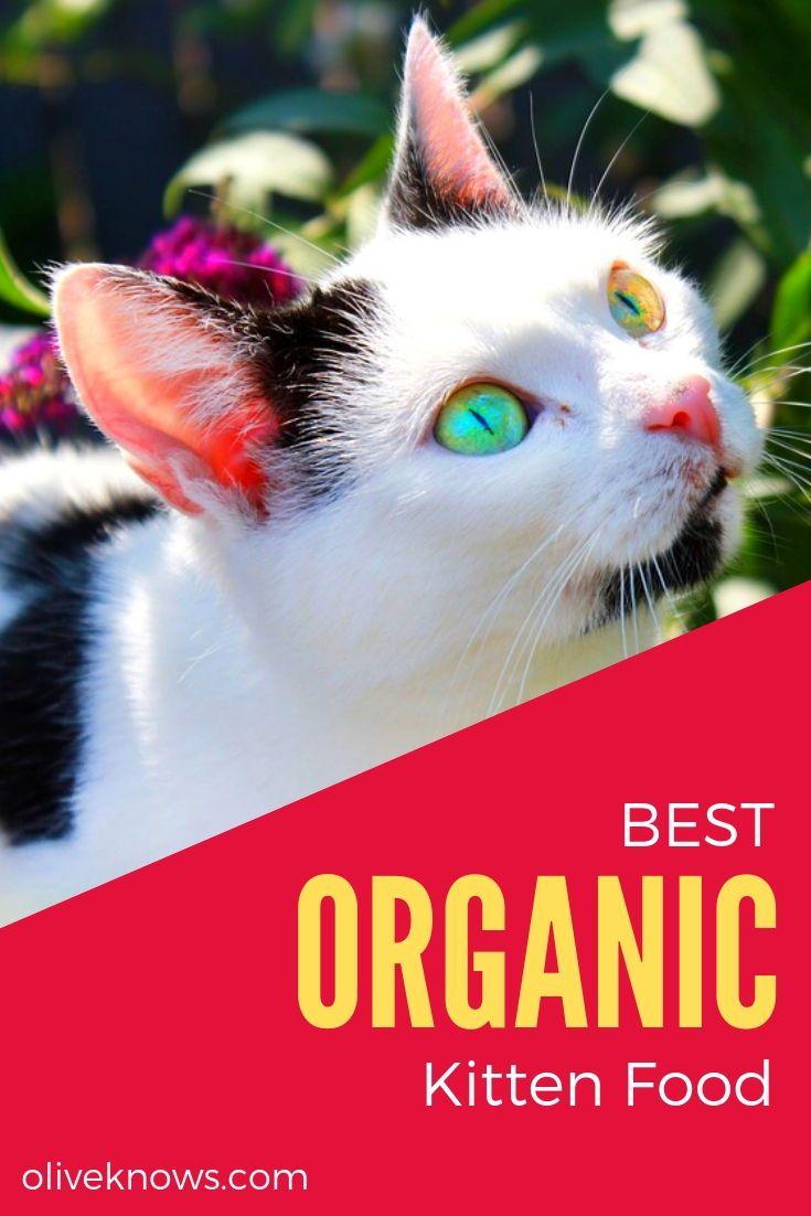 Best Organic Kitten Food New 2019 Recommendations Kitten Food Cat Food Cat Safety
