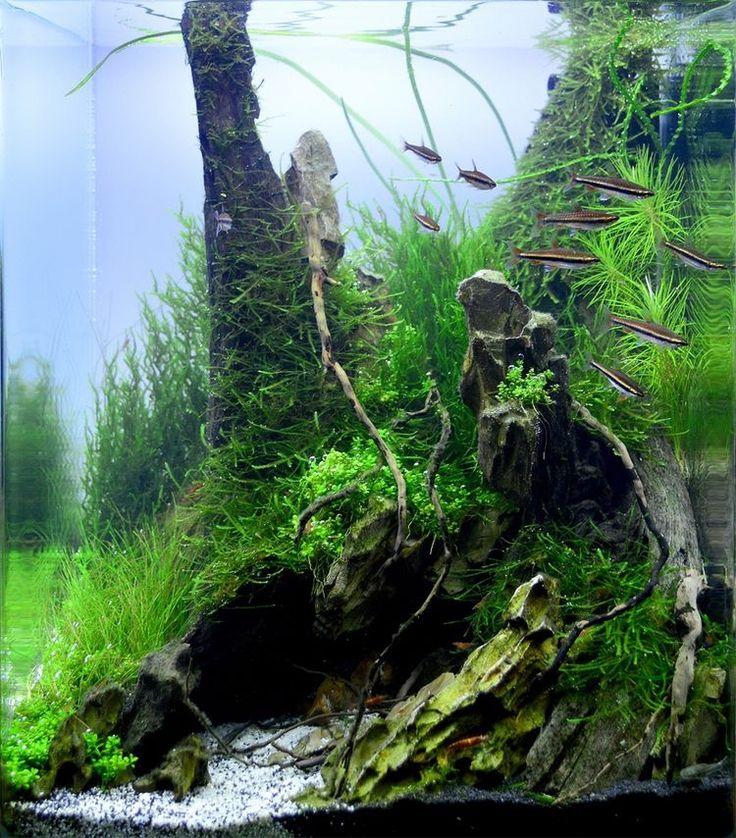 Green side of tank www.ibrio.it your aquarium born here ! il tuo acquario nasce qui ! https://www.facebook.com/ibrio.it #ibrio #acquario #acquari #acquariologia #acquariofilia #aquarium #aquariums #piante #natura #pesci #zen #design #arredamento #layout #layouts #layoutdesign #roccia #roccie  #moss #freshwater #plantedtank #aquadesignamano #tropicalfish #fishofinstagram #aquaticplants #natureaquarium #nanotank #reefkeeper #nanoreef #saltwateraquarium