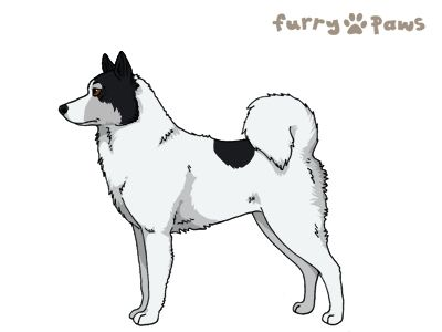 Furry Paws // WCT Kip's Zemplar [lla 2STM 7HH 2hh 1.325] *BoB*'s Kennel