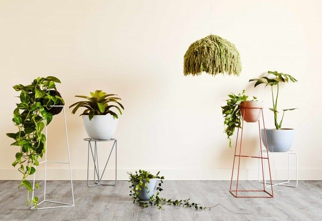 Ivy Muse release second limited edition range of plant stands