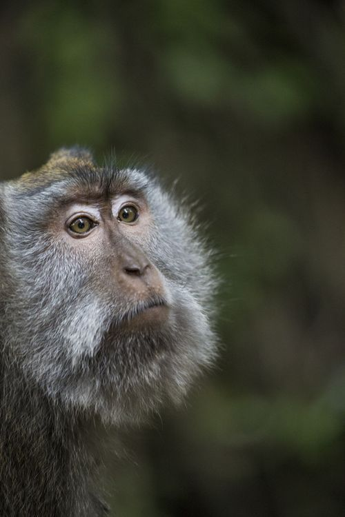 Monkey Being Photo by Emanuele Del Bufalo -- National Geographic Your Shot