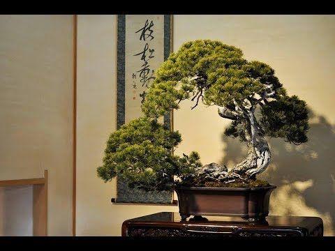 Bonsai   trees  ,suiseki  ,  fish  koi  and  tea  ceremony  2018