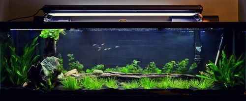 Built in Stand for a 125 Gallon Aquarium #2: Tank Set Up - by JoeyG @ LumberJocks.com ~ woodworking community