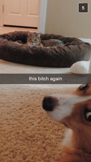 27 Snapchats From Your Dog
