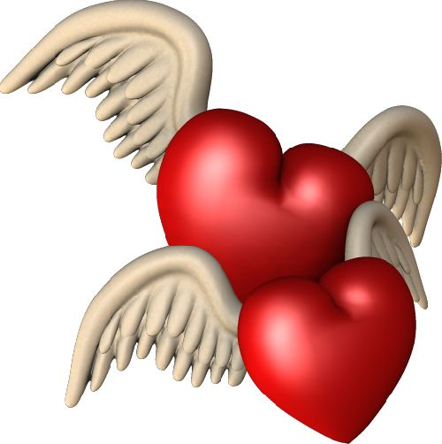 wings on hearts: