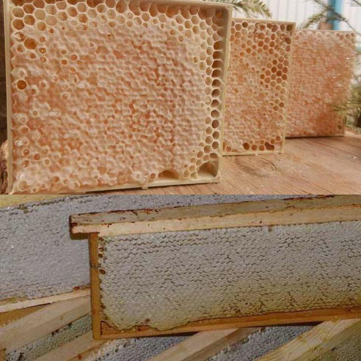 Сотовый #мёд# с каждым годом все популярнее и популярнее. Сейчас существует много способов получения данного продукта, есть и специальные мини-рамки и всевозможные баночки. Свойства и полезность сотового мёда будет выше чем у центрифужного. Сотовый мёд обогащен воском,прополисом и даже пчелиным ядом. Пчелиный яд пчелы добавляют под восковые крышечки чтоб законсервировать данный продукт. Это главное его отличие от обычного центрифужного мёда. СОТОВЫЙ МЁД-НЕ ВЫЗЫВАЕТ КАРИЕС! Им смело можно…