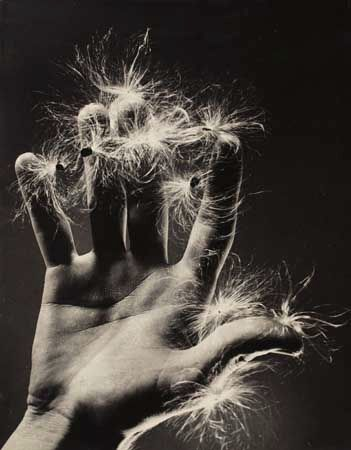 Ruth Bernhard     Untitled (Hand with Dandelion)     c.1936