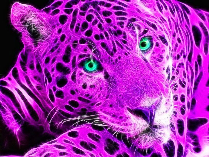 17 Best Images About Fractal Cats On Pinterest Cats