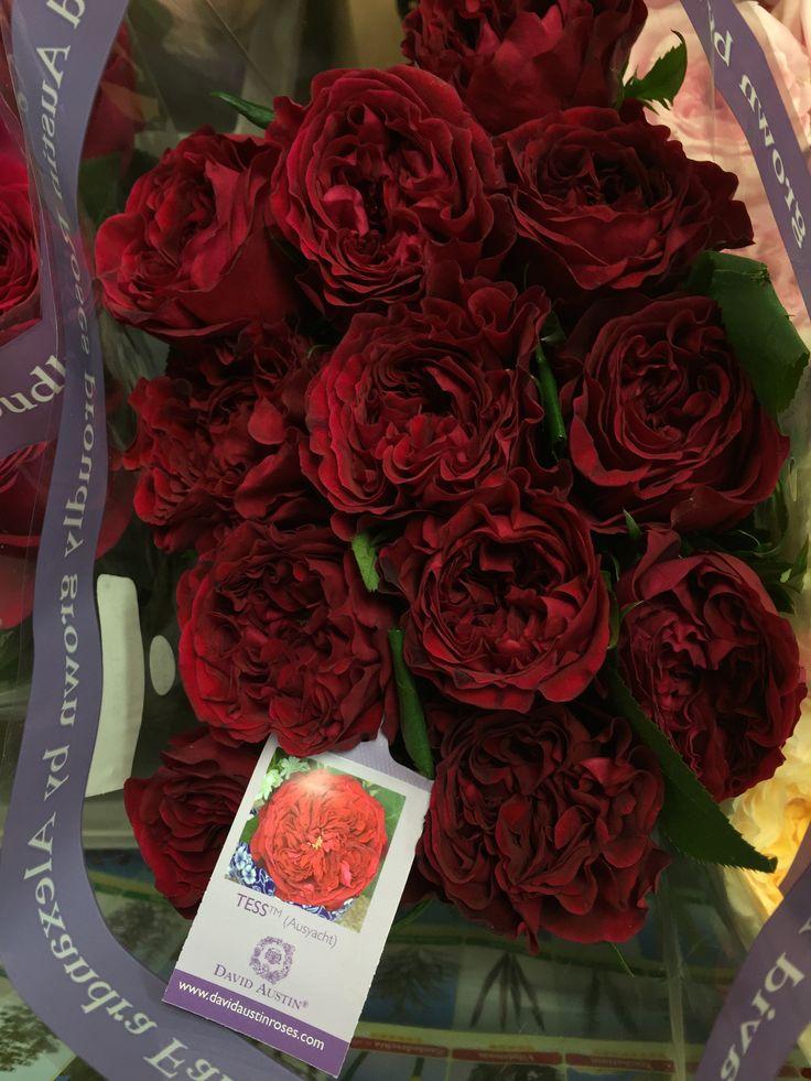 Roses In Garden: 20 Best Garden Roses Images On Pinterest