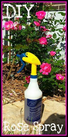Easy DIY bug spray killer for your rose bushes. Garden of Princess Penny