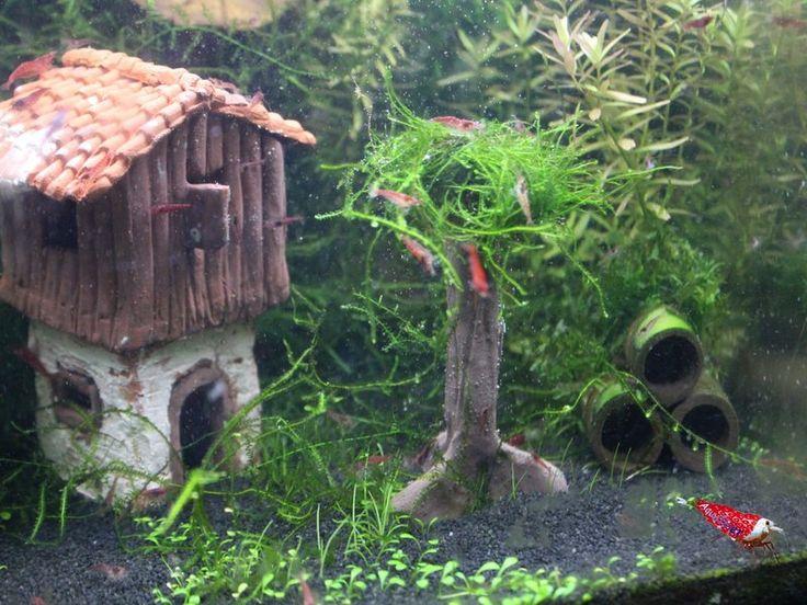 ber ideen zu aquarium deko auf pinterest moos wasserpflanzen und aquarium fische. Black Bedroom Furniture Sets. Home Design Ideas