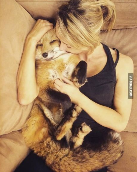 Your wife Melissa is a nurse. One day you come home to her sleeping on the couch with a little fox cub in her arms. Neither of you have a pet, besides Dexter, the goldfish. What do you say? (The two of them could also be fostering another kid character of yours if you'd like)