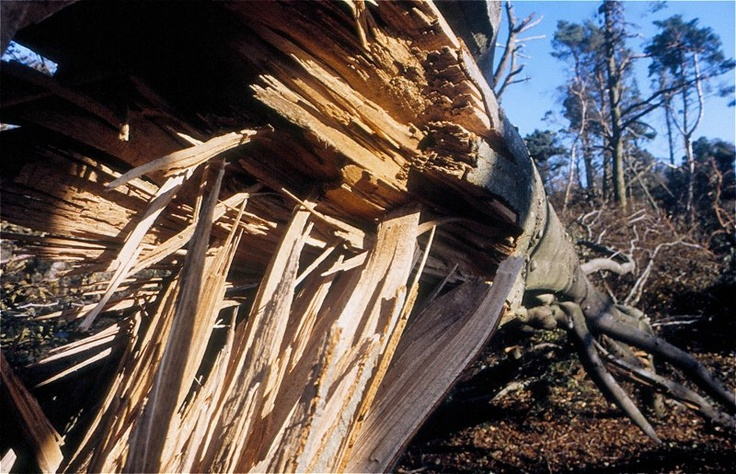 After the Hurricane Leith Hill Surrey Oct 1987