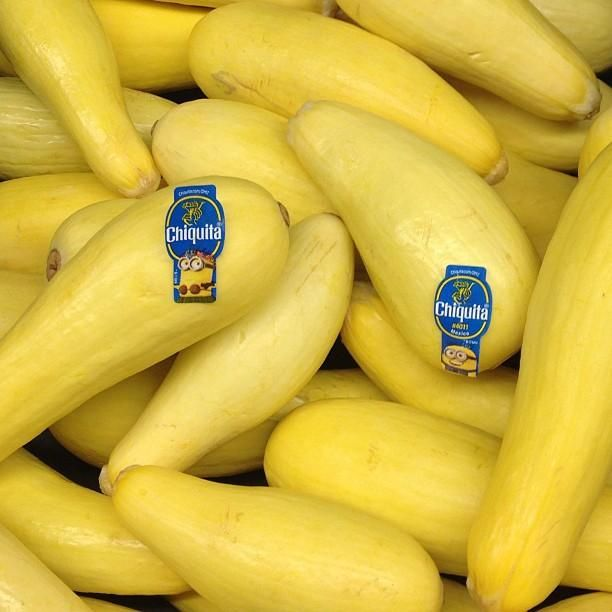 #stickaminiononit #chiquita #banana #despicableme2 #minion #minions #win #entertowin #photocontest #giveaway #garden #fresh #veggies #vegetables #yellow #summersquash #squash #organic #healthy #goodeats #edible #harvest #fromthegarden #nofilter #dietfriendly #week3 (Photo by @1FrugalMom)