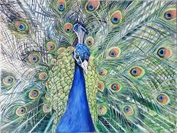watercolour peacock - Google Search