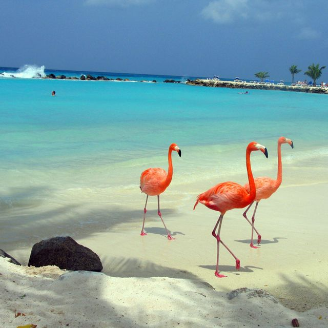 Who wouldn't want to watch flamingos while laying on the beach?