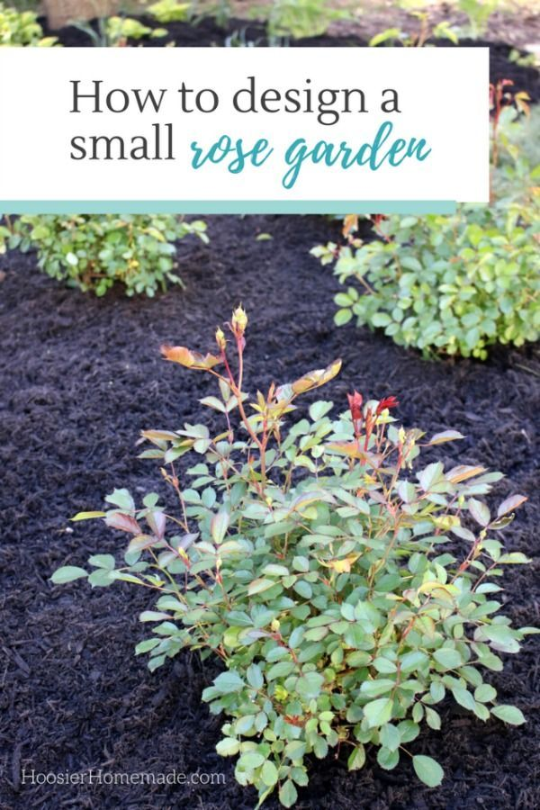 HOW TO DESIGN A SMALL ROSE GARDEN - Learn how to design and plant your own rose garden  #RosesYouCanGrow #ad #EasyElegance